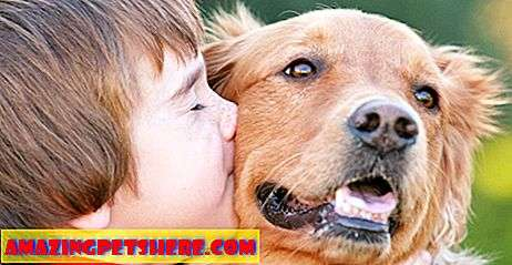 Dog Facts Và Fun: Do Dogs Like Kisses?