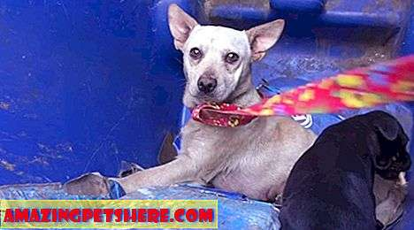 Anjing Rescue: Mama Dog And Puppy Tinggal Di Recycle Bin
