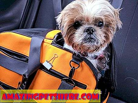Perjalanan Anjing: Review Produk DogTime: Sleepypod Air Dan Clickit Sport Travel Safety