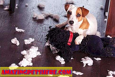 Fitness: Destructive Dog Chewing & Digging
