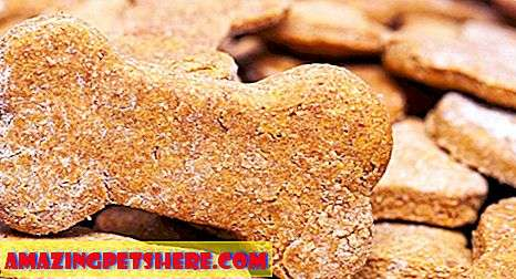 Peanut Butter Dog Treats - Snack Lezat Untuk Pup Favorit Anda!
