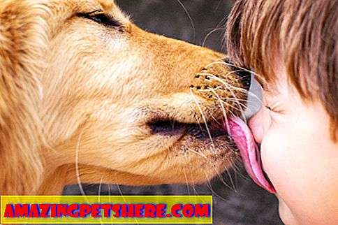Gaya hidup: Dog Licking And What It Means