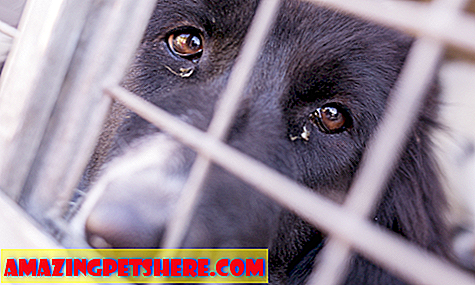 Puppy Search: Is It Wrong To Buy A Puppy - The Adopt Don't Shop Campaign