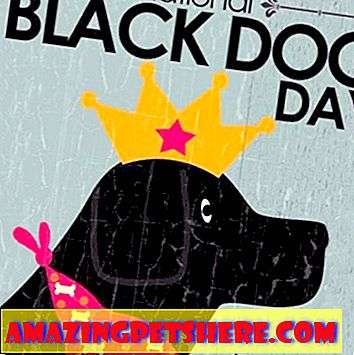 National Black Dog Day 1. Oktober: Adoptiere einen schwarzen Hund