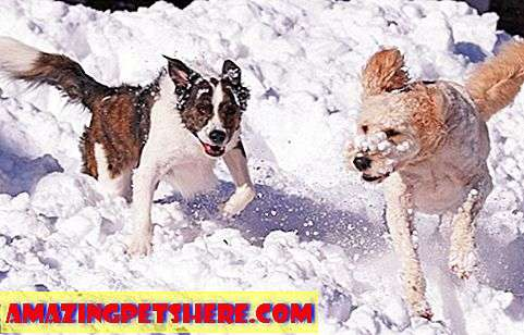 5 Hundefreundlich Winter Resorts